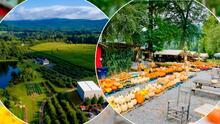 Lista de granjas para visitar este otoño y conocer los encantos de Carolina del Norte