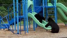 Osa enseña a su cachorro a deslizarse en un tobogán en el parque de una escuela