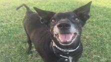 Arizona Humane Society ofrece adopciones de mascotas sin costo