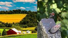 Vinos y cervezas: los productos más afectados por la mosca linterna manchada en Pensilvania