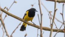 Fascinante avistamiento de inusual ave en el área de Pensilvania