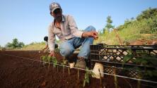 Denuncian que trabajadores agrícolas en Florida laboran sin protección contra el coronavirus