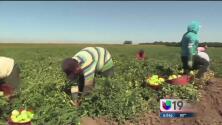 Nuevas regulaciones de  manejo de pesticidas