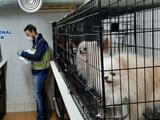 Cortaban las cuerdas vocales a los perros para que no ladren: rescatan a 270 animales de un criadero ilegal