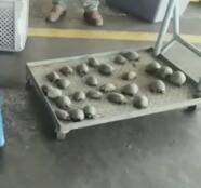 Hallan envueltas en plástico y en condiciones deplorables casi 200 tortugas galápagos para ser comercializadas
