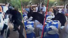 (Video) Oso irrumpe en una boda y genera pánico entre los invitados