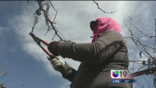 Pérdidas millonarias en campos agrícolas del valle de San Joaquín por inundaciones