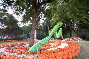 "El Arboretum estará abierto de 9AM a 5PM. Si gusta visitar,  <a href=""https://reservations.dallasarboretum.org/Info.aspx?EventID=3#AutumnattheArboretum"" target=""_blank"">aquí</a> puede obtener sus boletos."