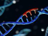 """Qué es la técnica de """"tijeras genéticas"""" que ganó el Nobel de Química y su importancia para el control de enfermedades hereditarias"""