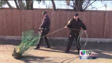 Autoridades responden al problema de perros callejeros en Modesto
