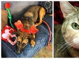 Austin Animal Center eximirá las tarifas de adopción en celebración de San Valentín