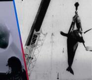 """""""Golpeó su cabeza contra el vidrio tantas veces, hasta que se mató"""": La dramática historia de una orca en cautiverio"""