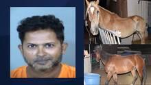 Arrestan a un hombre por crueldad animal y rescatan a tres caballos en Chandler