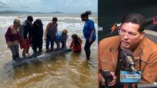 Muere manatí en Humacao tras ser impactado por embarcación y ya son 11 mamíferos muertos en lo que va del año