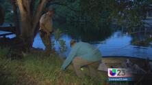 Autoridades no logran capturar cocodrilo en Coral Gables