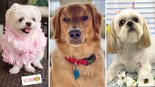 Día Nacional del Perro: te presentamos las mascotas de parte del equipo de Univision 45