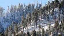 Estas son algunas recomendaciones para disfrutar de la nieve de forma segura en las montañas de California