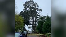 Ordenan evacuación de tres viviendas de San Francisco por árbol que las pone en peligro