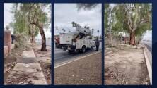 Sin electricidad y con árboles caídos así amaneció Tucson tras las intensas lluvias