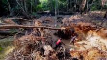 La codicia que destruye el Amazonas: cómo la minería ilegal puede acabar con el pulmón del planeta
