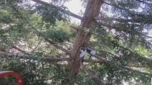 Bomberos graban el rescate de un gatito que se había quedado atrapado en lo alto de un árbol