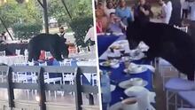 """""""Quiero mi carnita asada"""": Oso irrumpe en restaurante de Nuevo León y se pone a comer"""