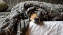 El perro que se robó nuestros corazones