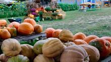 Los huertos de calabazas y laberintos de maíz para visitar en el área de Sacramento