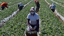 Presentan propuesta de ley para ayudar a familias de agricultores