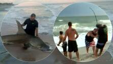 Capturan a enorme tiburón martillo en playa de Carolina del Norte