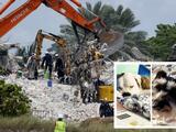 """""""No encontramos mascotas antes de la demolición"""": asegura la alcaldesa de Miami-Dade"""