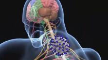 Especialistas de la Universidad de Arizona estudian los efectos neurológicos provocados por el coronavirus