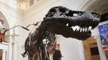 'Chicago en un Minuto': Durante todo febrero, el Museo Field tendrá entrada gratuita para sus atracciones básicas