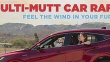 Puedes ganar un auto y ayudar a las mascotas del Arizona Humane Society