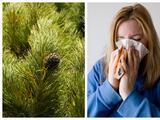 Recuento de polen de cedro en Austin es el más alto de esta temporada