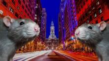 Entre ratas y cucarachas: aumentan los avistamientos de plagas en Filadelfia