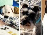 Las mascotas dejadas atrás: el dolor de quienes salvaron su vida, pero perdieron a sus animales en el derrumbe de Surfside