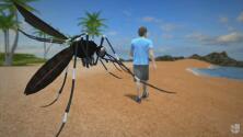 Animación: las autoridades sanitarias identifican a mosquitos con zika en Florida