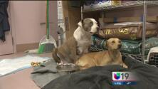 Perros de Stockton son gravemente heridos tras sufrir abuso sexual