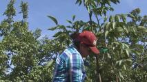 Salud de trabajadores del campo en riesgo debido a la mala calidad del aire