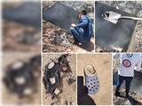 Madres de desaparecidos hallan un presunto horno crematorio clandestino con restos humanos ardiendo