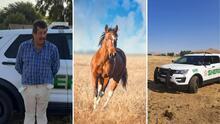 Investigan la muerte de 4 caballos que estaban en pésimas condiciones en Porterville