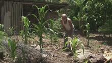 Reportan escasez de trabajadores en varias zonas de Honduras por la migración masiva hacia EEUU