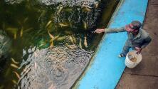 ¿Qué es la acuicultura y cuáles son sus beneficios para la población y el medio ambiente?