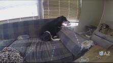 Rescatan a mascotas abandonadas en un apartamento