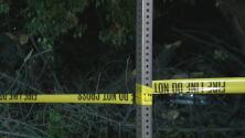 La caída de un árbol en Studio City deja un vehículo dañado y la calle bloqueada