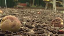 Destruyen un jardín comunitario en Manhattan que tenía más de 45 años de existencia