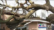 Árbol se desploma en casa en Fair Oaks