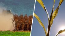 Intensa sequía amenaza los cultivos y a trabajadores del campo en California