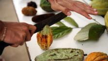 Tras volver de EEUU, productor mexicano de cacao demuestra que sí se puede ser profeta en su tierra
